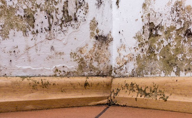 mold home inspection service